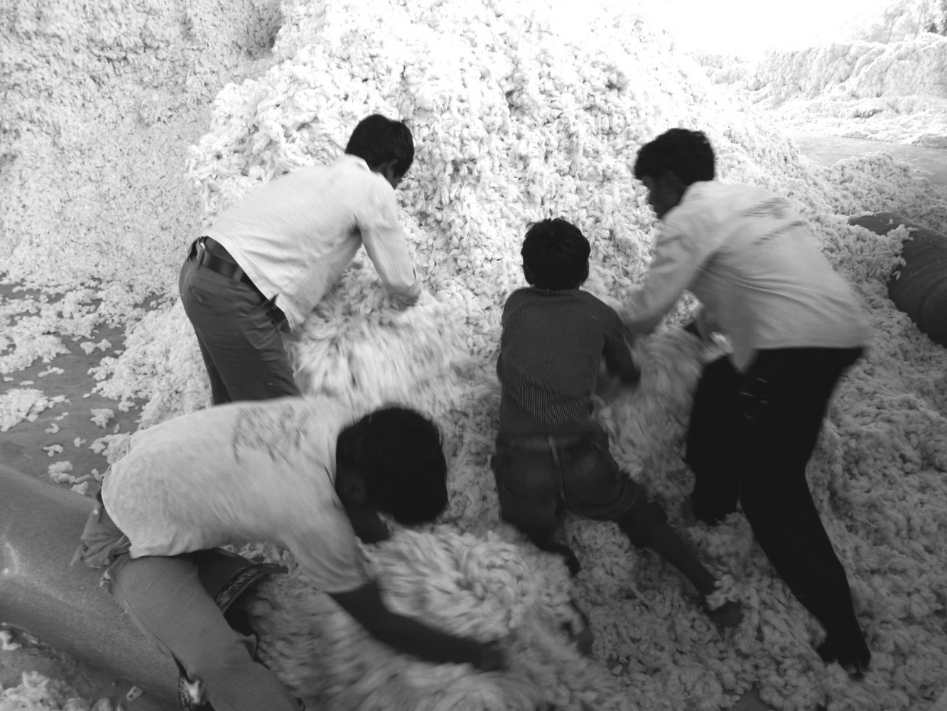 Cotton workers in Andhra Pradesh, India. Copyright Jankie 2011.