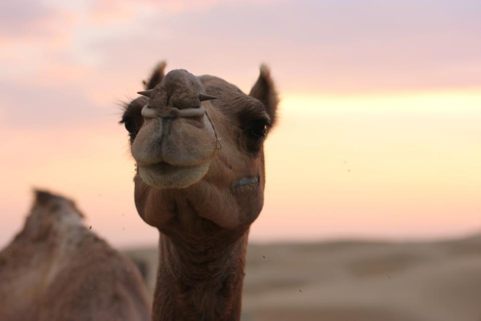 thar desert 3