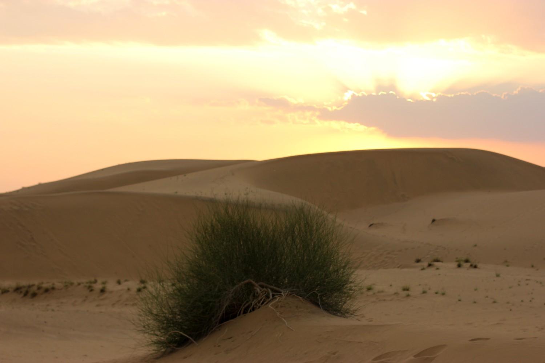 thar-desert-5